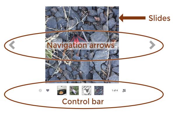 Slideshow module overview - Beaver Builder Knowledge Base